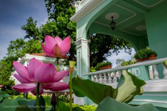 Festival Bunga Lotus