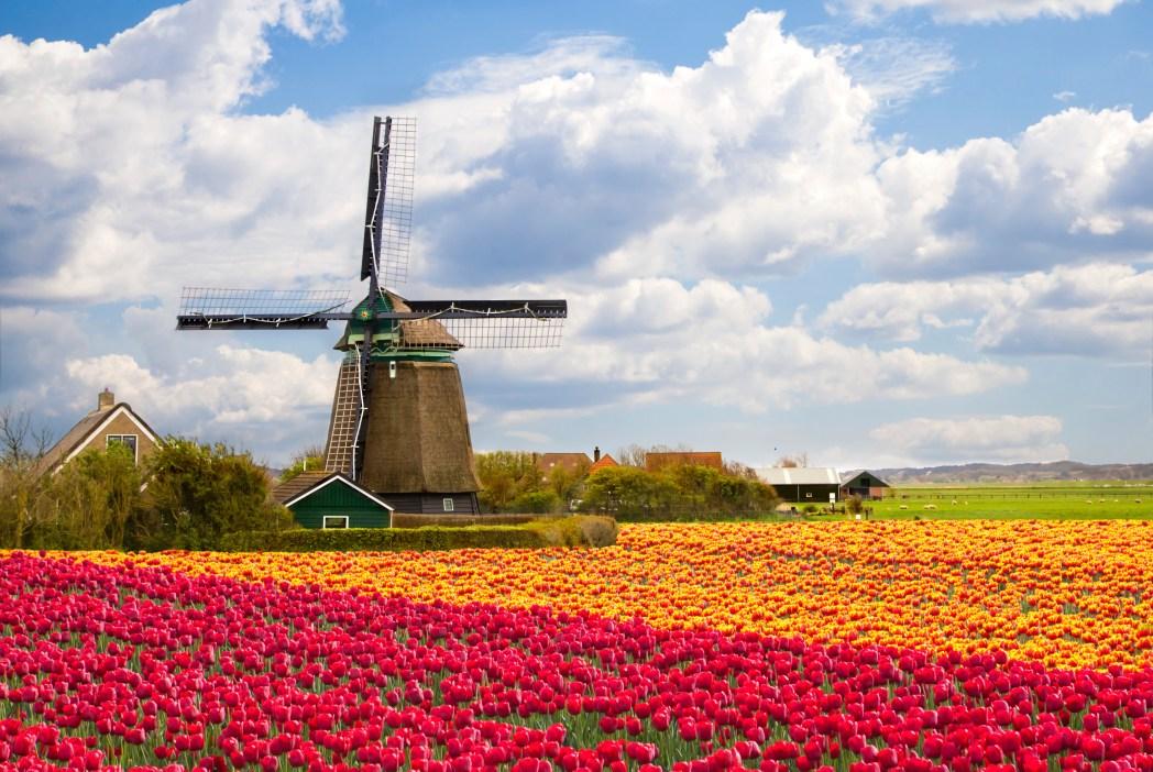 Ladang tulip dan kincir angin, yang paling dicari oleh turis yang ke Belanda